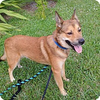 Adopt A Pet :: Junior - Ft. Lauderdale, FL