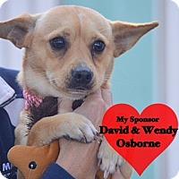 Adopt A Pet :: Tanner - San Leon, TX