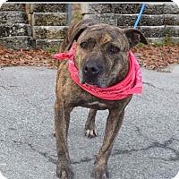 Adopt A Pet :: KoKo - Williamsburg, VA
