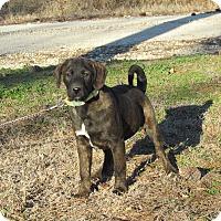 Adopt A Pet :: SULLY - Bedminster, NJ