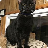 Adopt A Pet :: Ozzy - Hanna City, IL