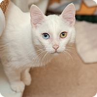 Adopt A Pet :: Muller - Mission Hills, CA