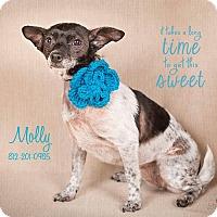 Adopt A Pet :: Molly - Terre Haute, IN