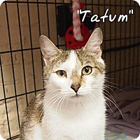 Adopt A Pet :: Tatum - Ocean City, NJ