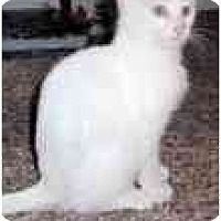 Adopt A Pet :: Forbes - Arlington, VA
