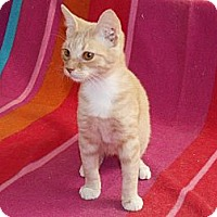 Adopt A Pet :: Mr. Ginger - Scottsdale, AZ