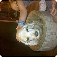 Adopt A Pet :: Lady - Murfreesboro, TN