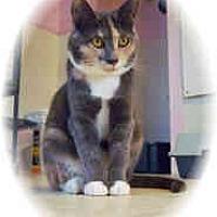 Adopt A Pet :: Sunni - Shelton, WA