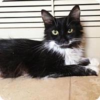 Adopt A Pet :: Elaina - Phoenix, AZ