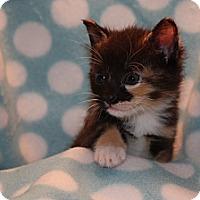Adopt A Pet :: Sonja - Union, KY
