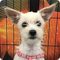 Adopt A Pet :: Lily - Orlando, FL