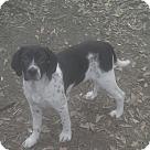 Adopt A Pet :: Spuds