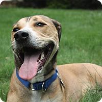 Adopt A Pet :: Toby~URGENT! FOSTER NEEDED! - Shrewsbury, NJ