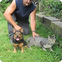 Adopt A Pet :: MAX - WOODSFIELD, OH