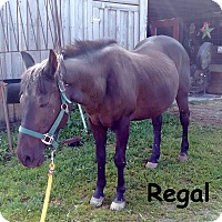 Adopt A Pet :: Regal - Warren, PA