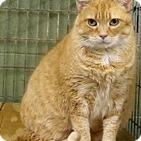 Adopt A Pet :: Sammie - Marlinton, WV