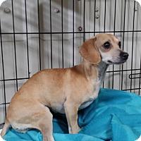 Adopt A Pet :: Sage - Lubbock, TX