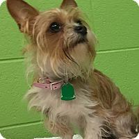 Adopt A Pet :: Belfie - Nashville, TN