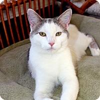 Adopt A Pet :: Hank - Fairfax, VA