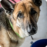 Adopt A Pet :: Peridata - Phoenix, AZ