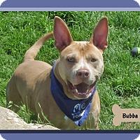 Adopt A Pet :: Bubba - Hillsboro, TX