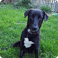 Adopt A Pet :: Sinna - Alexandria, VA