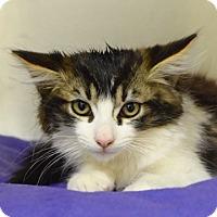Adopt A Pet :: Rajah - Dublin, CA