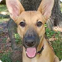 Adopt A Pet :: Bambi - Ormond Beach, FL