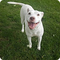 Adopt A Pet :: Emma Frost - Kettering, OH