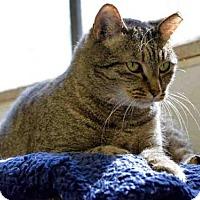 Domestic Mediumhair Cat for adoption in Fort Walton Beach, Florida - FREETA