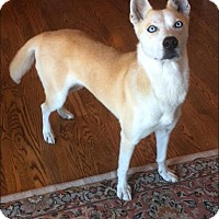 Adopt A Pet :: Amber - Middletown, DE