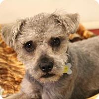 Adopt A Pet :: Chino - Phoenix, AZ