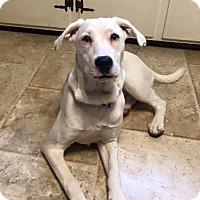 Adopt A Pet :: Perry - Salamanca, NY