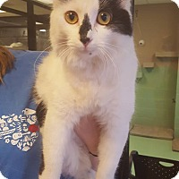 Adopt A Pet :: Vivian - Gadsden, AL
