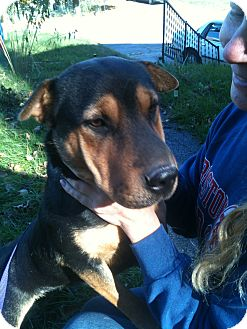 Shar Pei/Shepherd (Unknown Type) Mix Dog for adoption in Newport, Vermont - Luna
