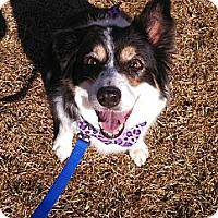 Adopt A Pet :: Missy Mona - Denver, CO