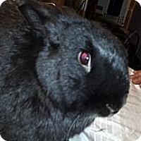 Adopt A Pet :: Monty - Conshohocken, PA