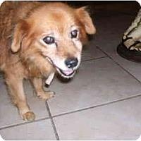 Adopt A Pet :: LUCY - SCOTTSDALE, AZ