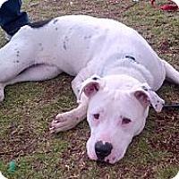 Adopt A Pet :: Moe - Santa Monica, CA