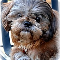 Adopt A Pet :: Charley-VA - Mays Landing, NJ