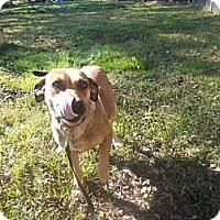 Adopt A Pet :: Katrina - Pawling, NY