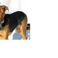 Adopt A Pet :: Maizy - in Maine! - kennebunkport, ME