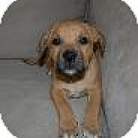 Adopt A Pet :: Baby Jackson - Marlton, NJ