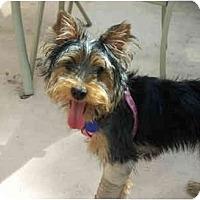 Adopt A Pet :: Lily - West Palm Beach, FL