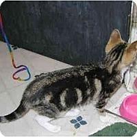 Adopt A Pet :: Sarah - Davis, CA