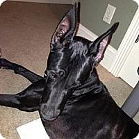 Adopt A Pet :: Tess - O'Fallon, MO