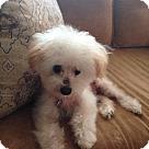 Adopt A Pet :: Piglette