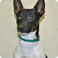 Adopt A Pet :: Kix - Port Washington, NY