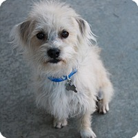 Adopt A Pet :: Ben - California City, CA