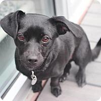 Adopt A Pet :: Val - Smyrna, GA